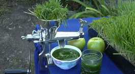 5 Best Wheatgrass Juicers