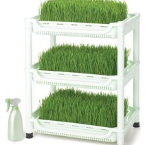 Wheatgrass Growing Kit – Grow & Juice Your Own at Home
