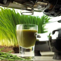 Disadvantages of Drinking Wheatgrass Juice